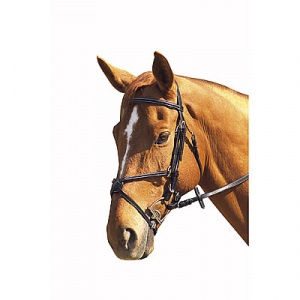 Norton Half round bridle with figure 8 noseband