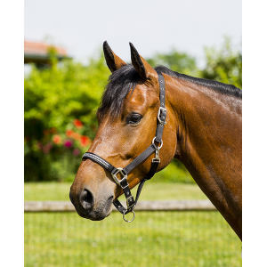 "EQUITHÈME ""Diamond"" headcollar"