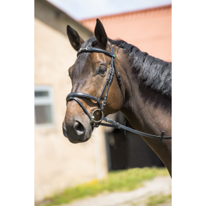 "NORTON ""Shiny Eggbutt Bit"", flash noseband"