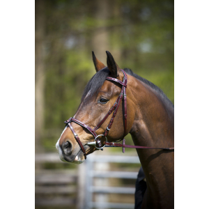 "C.S.O. ""Optimum"" bridle, flash noseband"