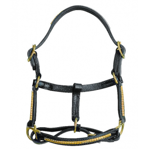 Apollo Foal headcollar