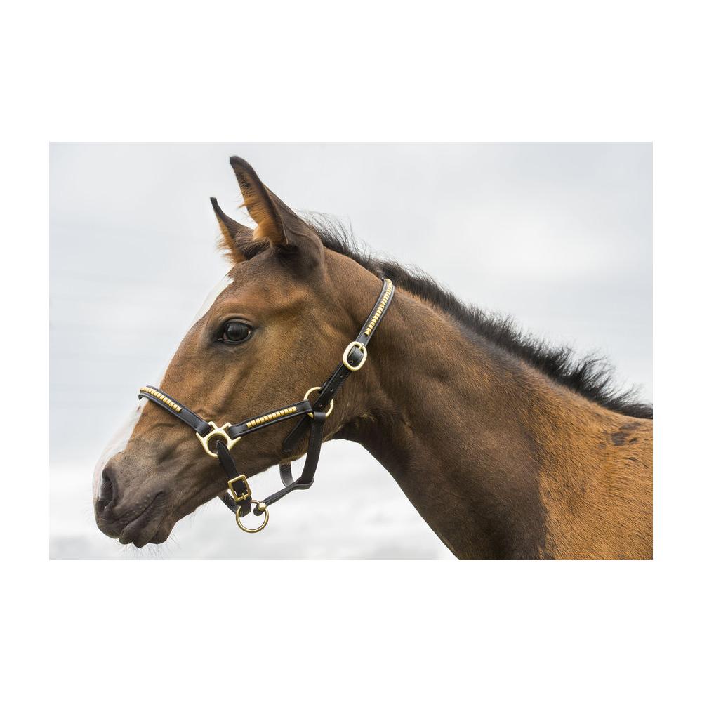 Licol Norton Club Foal Clincher