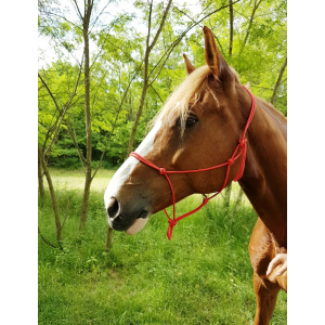 Riding World Fine Ethological halter