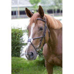 Norton Luxe Fancy Bridle