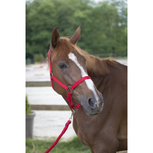 Riding World Club Headcollar and leadrope set