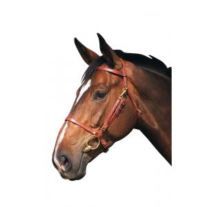 Excelior Bridle/headcollar