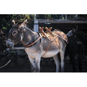 Bât bois pour âne