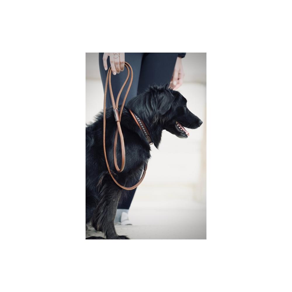 Laisse Pénélope Point Sellier pour chien