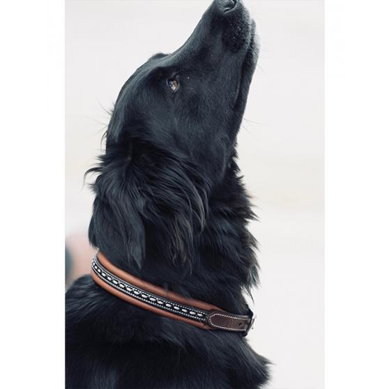 Collier de chien Pénélope Point Sellier