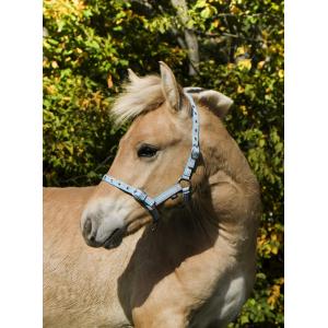 Licol Norton Foal