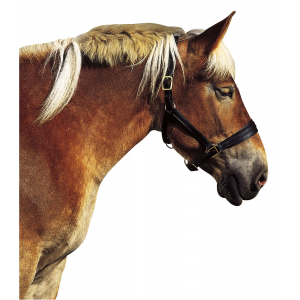 Draught horse headcollar EXCELSIOR