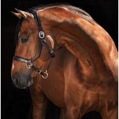 Licol Horseware Rambo Micklem