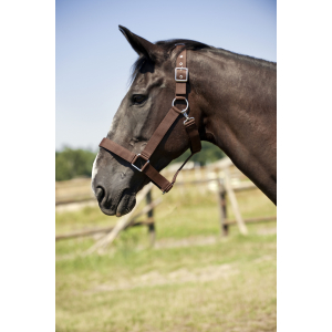 Draught horse nylon headcollar NORTON