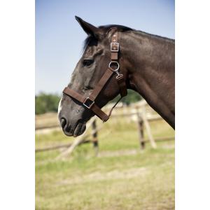 NORTON Halster voor trekpaard