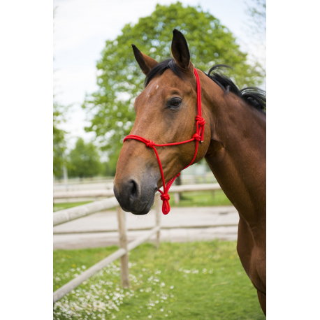 Full and Extra Full-Red Leather Craft Adjustable Rope Horse Halters For Training and Riding Cob Available Size: Pony