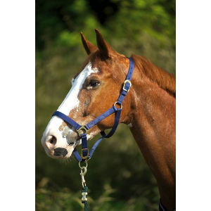 Norton Double thickness nylon headcollar with buckles