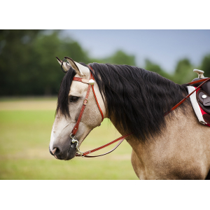 Randol's Two Tone bridle