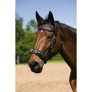 Neoprene lined lunging cavesson Norton