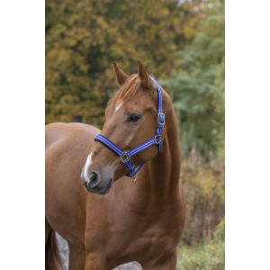 Norton Strong Halter