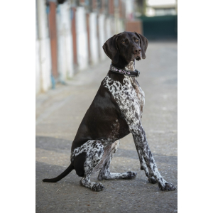 Pénélope Pearl Hundehalsband