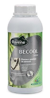 Becool Ravene