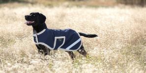dog's range at padd-horsetack