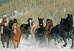 Les chevaux et le grand froid